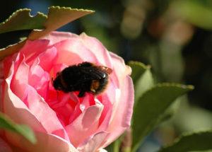 A méhészeti képzés tökéletes kiindulópont